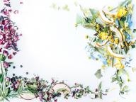 植物療法士 森田敦子さんに聞く「ハーブとハーブチンキの力」