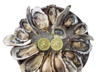 牡蠣を愛するあの人の、おすすめプレート  VOL. 03