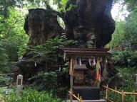 熱海のパワースポット『来宮神社』 で実感した効果とは?