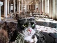 猫が警備員⁈ #大エルミタージュ展  #深夜のこっそり話 #651