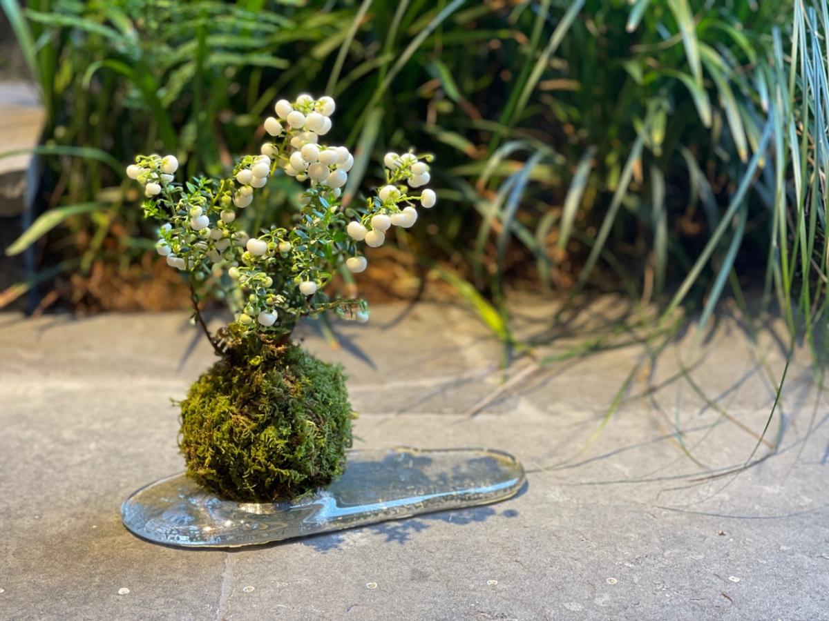 京都発! 古き良き日本の園芸文化をモダンに解釈【(THISIS)SHIZEN】