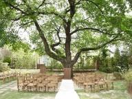 樹齢100年の大樹に見守られて。心温まる森の日だまりセレモニー