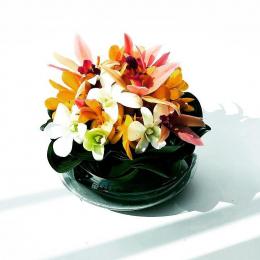春を待ちわびて、花を愛でよう、花と暮らそう