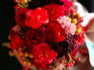 芳醇に咲き誇る、エレガントな深紅のグラデーションに魅了