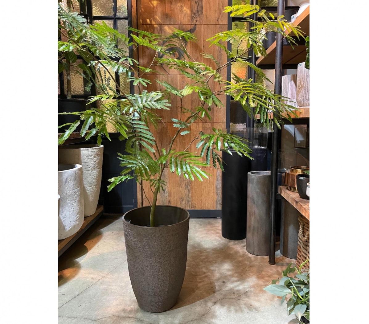 ハイセンスな植物が見つかる、外苑前のオアシス【FUGA】