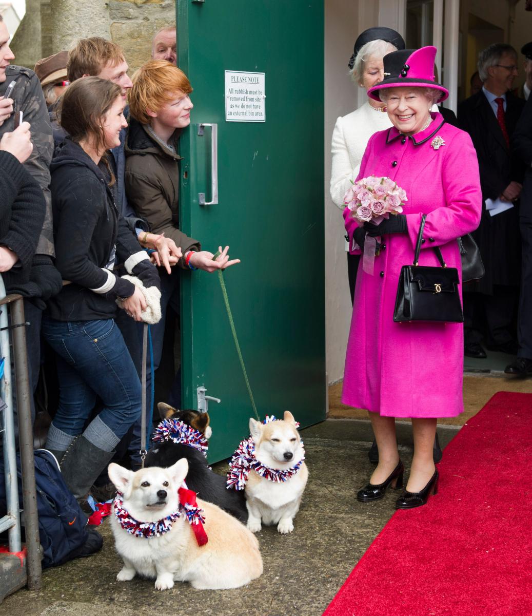 鮮やかなピンクコートでコーギー犬に出迎えられて