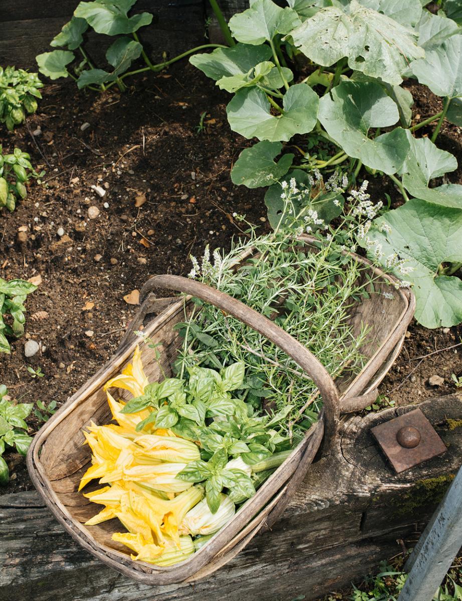 広大な敷地には2つの菜園があり、ミッソーニのキッチンで使われる ズッキーニ、トマト、キュウリ、ルッコラなどの 新鮮な野菜が育てられている。 朝の散策のあいだ、ニンニクやバジル、ローズマリー、ミントの花などの いい香りが空気に満ちていた