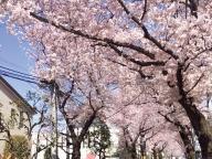バスに揺られて楽しむ桜並木