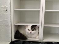 ステラ マッカートニーの「猫になりたい」 #SPUR8月号