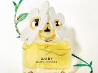 DAISY【デイジー: 開花時期 3月~5月 】