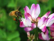 ミツバチの恵みで暮らしを豊かに、美しく! 山田養蜂場が「アピセラピー」のイベントを開催
