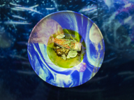 テクノロジーアートと料理が融合する、非日常の体験を。「TREE by NAKED yoyogi park」のアートディナーコースを堪能