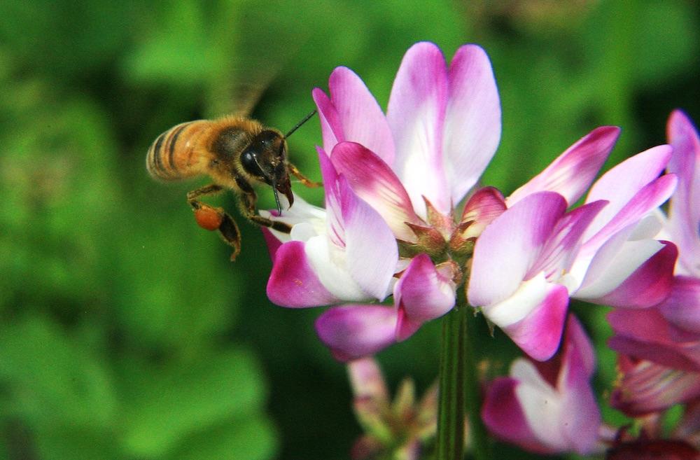 ミツバチの恵みが美や健康にもたらす力の研究は、ヨーロッパでは古くから行われていたそう。