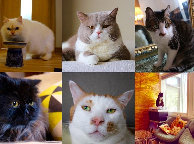 展示作品に登場する、個性豊かな猫たち。見ているだけで癒されること必至!