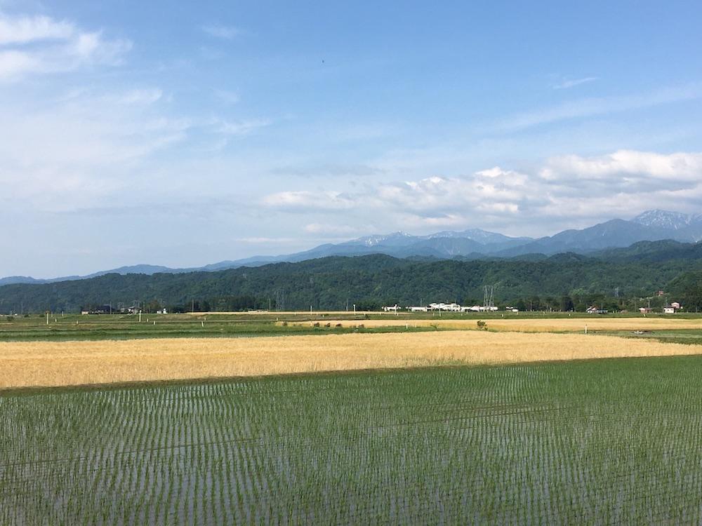 イベントは富山に移住したユニオン ランチのクリエイティブディレクター加藤公子らがキュレーション。溢れる自然を堪能しつつ、イベントを楽しんで。