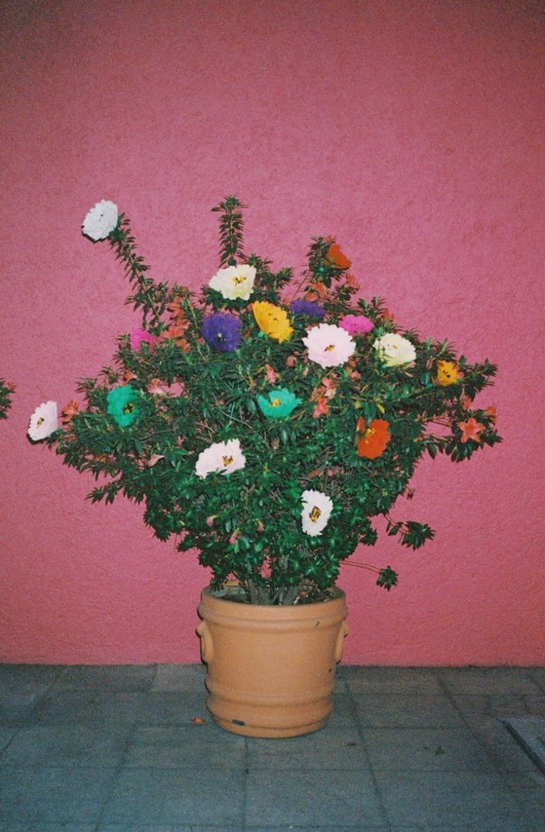 メキシコの紙やトウモロコシの皮でつくられた造花は、さまざまな使い方ができる楽しいアイテム。
