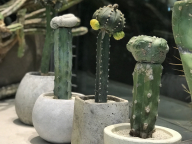 """""""いい顔してる""""植物をギフトに。「叢 – Qusamura」のポップアップストア、ユナイテッドアローズ 原宿本店で開催中"""