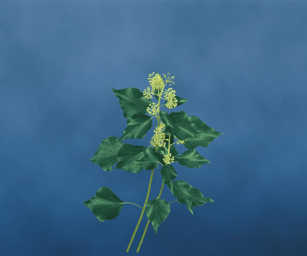 エルワン・フロティンによる植物の写真。