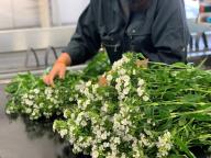 花を飾って生産者を応援! 無印良品で南房総の生花販売がスタート