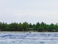 """岸からイルカが見られるなんて! イルカが跳ねる楽園スポット""""ティプタパス""""(ランギロア島)"""