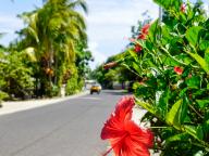 こんなに花だらけの島があったなんて! 花にまみれるタヒチ