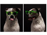 各色150本限定! ハフ×アキラによるリミテッドエディションのサングラス「レガシー」に注目