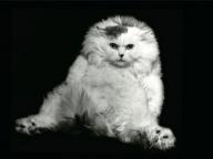 猫をテーマに、ミュベールと写真家の榊原俊寿がコラボレーション