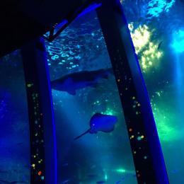 大人だって楽しめる水族館 #深夜のこっそり話 #914