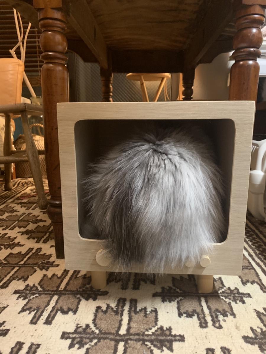 テレビ画面から飛び出すお尻。