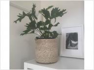 シンプルな鉢植えを、夏仕様に