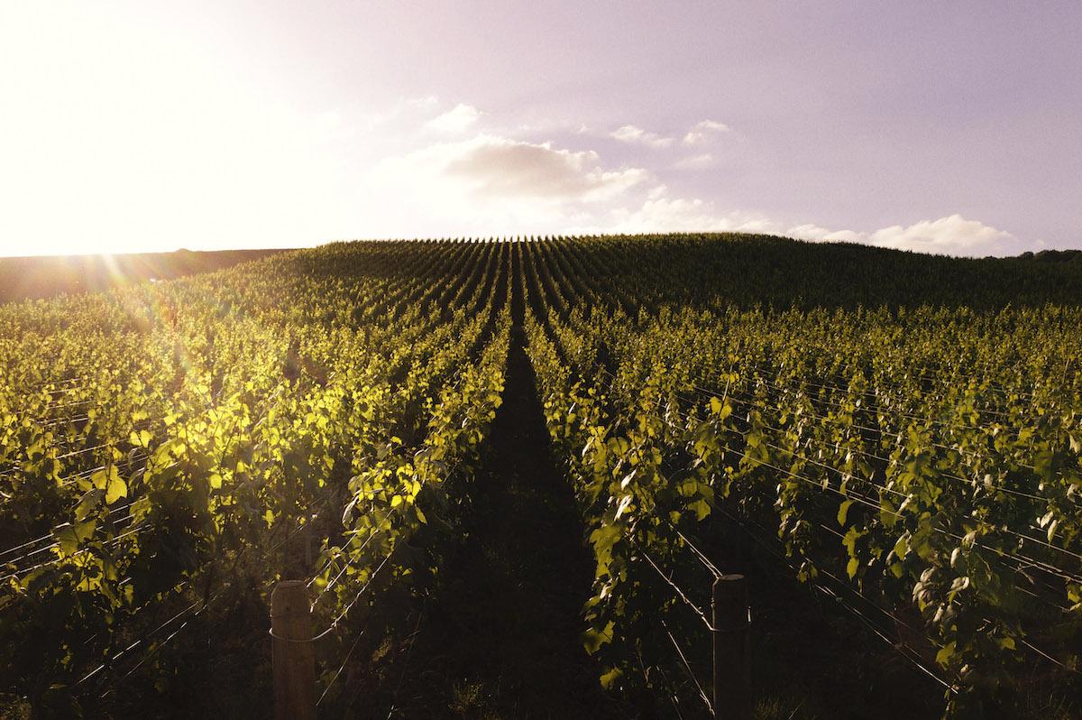 シャンパーニュ地方コート・デ・ブラン地区でグラン・クリュ(特級畑)に分類される5つの村のシャルドネのみが原料となる。