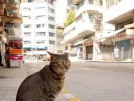 ひとりっPが旅先で出会ったキュートな猫たちをスナップ