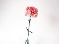 母の日に贈りたいピンクフラワー