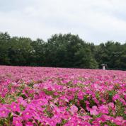 花畑で夢を見る