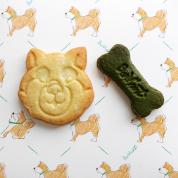 愛すべき柴犬クッキー #深夜のこっそり話 #1254