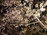 「KYOTOGRAPHIE 2017」で春の京都を堪能
