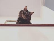 猫好きのための「撮リセツ」の前セツ