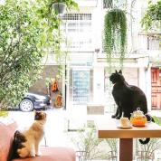 行くべき店はここ! ひとりっP的台湾食いだおれアドレス【Part2】台北カフェ&スイーツ編