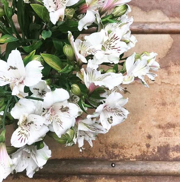 【番外編】ひとりっPが見つけた、ペルーの花たち