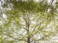 森のシンボルである巨大な木がふたりを祝福