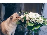 貫禄ある猫に新しいルームメイトが!
