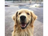 ファニーな笑顔が魅力の大型犬