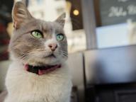 ネコ好きによる、ネコ好きのための、猫ドキュメンタリーを見比べ!