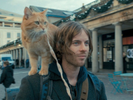 猫の映画、犬の映画を見ると気になること