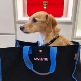 パリジャン犬スウィーティーが振り返る、2017年。